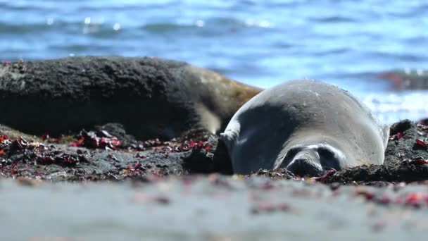 Two seals rest on the background of the water. Andreev.