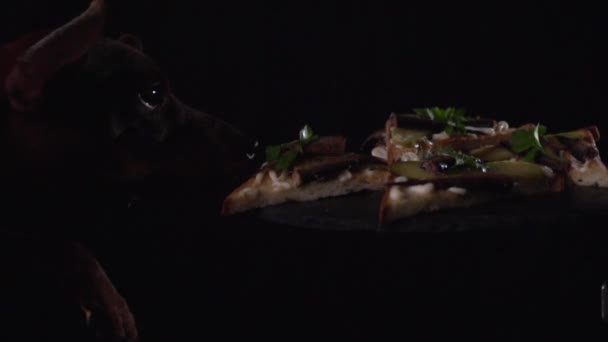 Pes se dívá na sendviče na lavici
