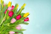 Jarní tulipány na modrém pozadí