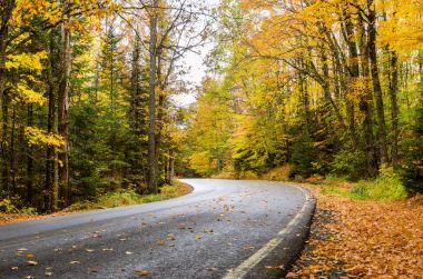 Mountain Road Through an Autumn Forest