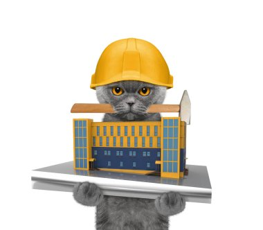 cat builder holding house construction in its paws