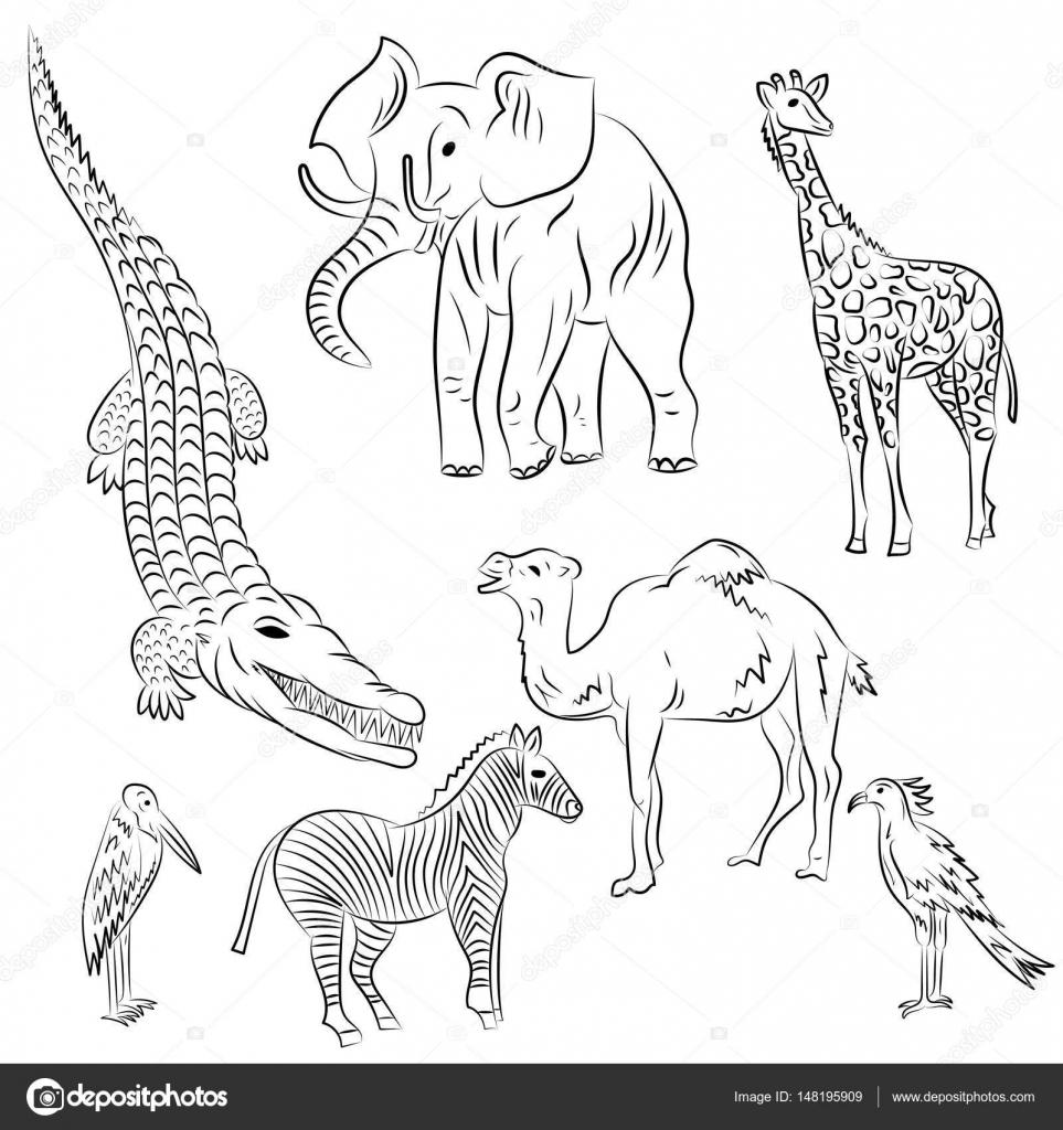 Aves y animales africanos dibujado a mano. Doodle dibujos de ...