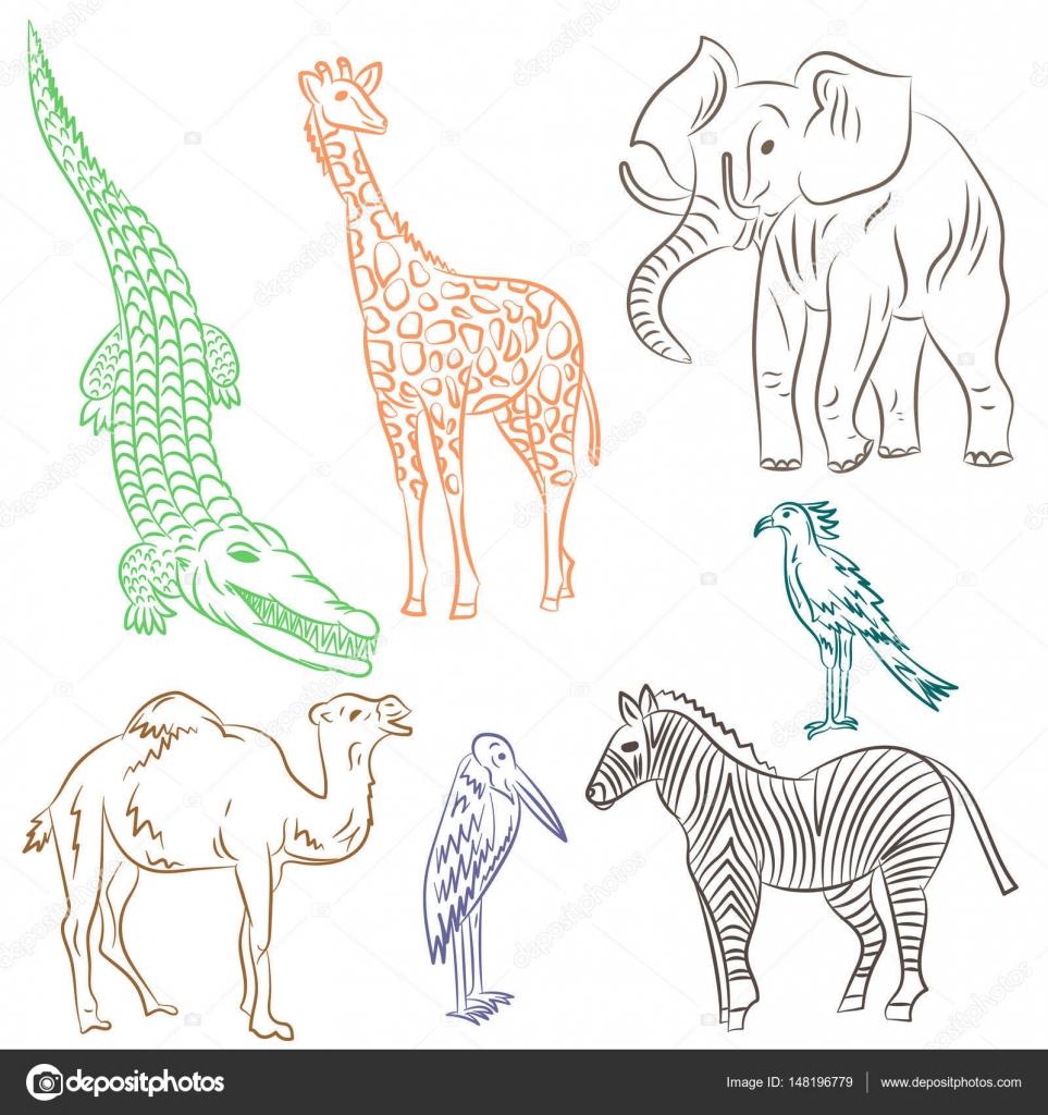 Dibujado a mano colorido africano animales y aves. Doodle dibujos de ...