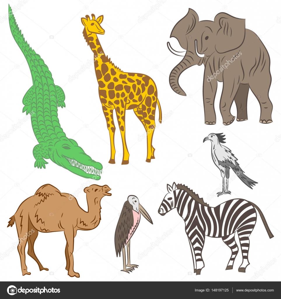 Animali Africani Colorati Disegnati A Mano E Uccelli Disegni Di