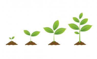 Planting tree. Seedling gardening plant. Seeds sprout in ground.