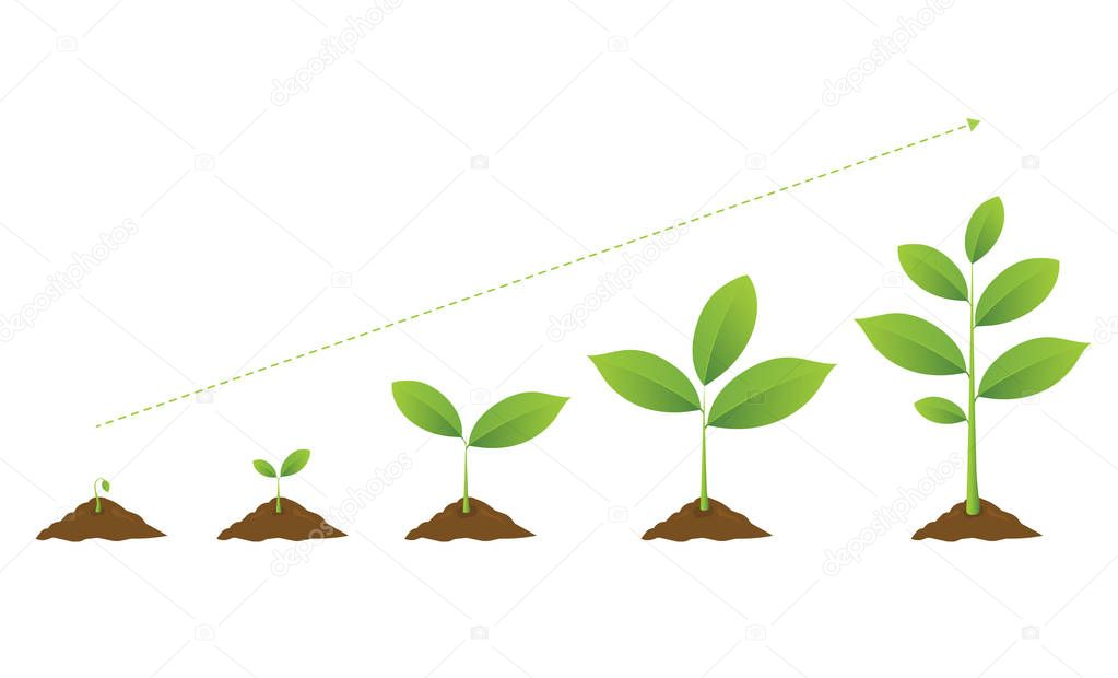 Infographic of planting tree. Seedling gardening plant.