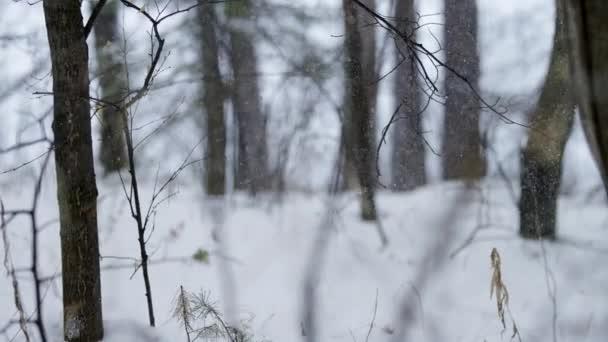 A fióktelepek ath havazik-Dér