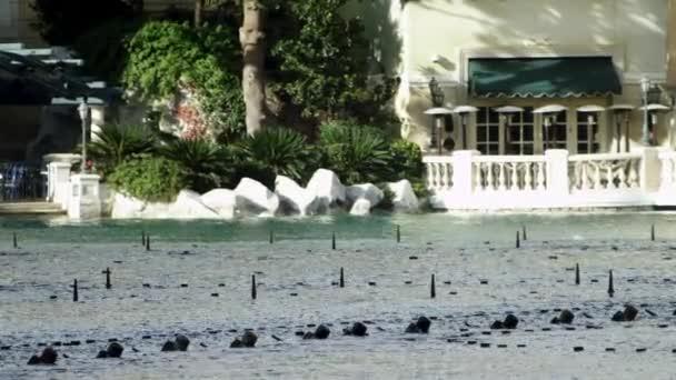Beautiful water show in Vegas