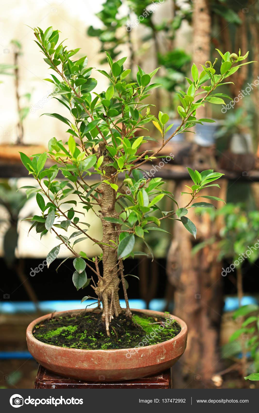 Rośliny I Mech Roślina W Doniczce Zdjęcie Stockowe S