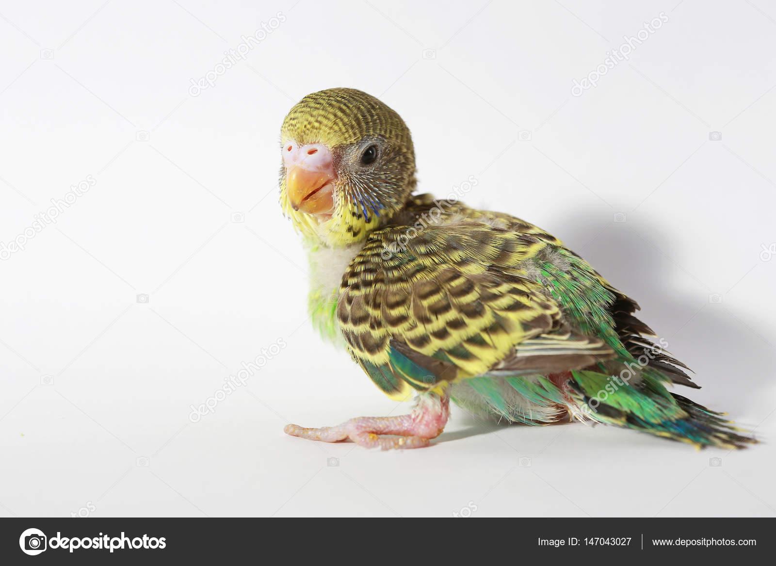 εικόνα μωρό με μεγάλο πουλί άγριο μουνί κανάλι
