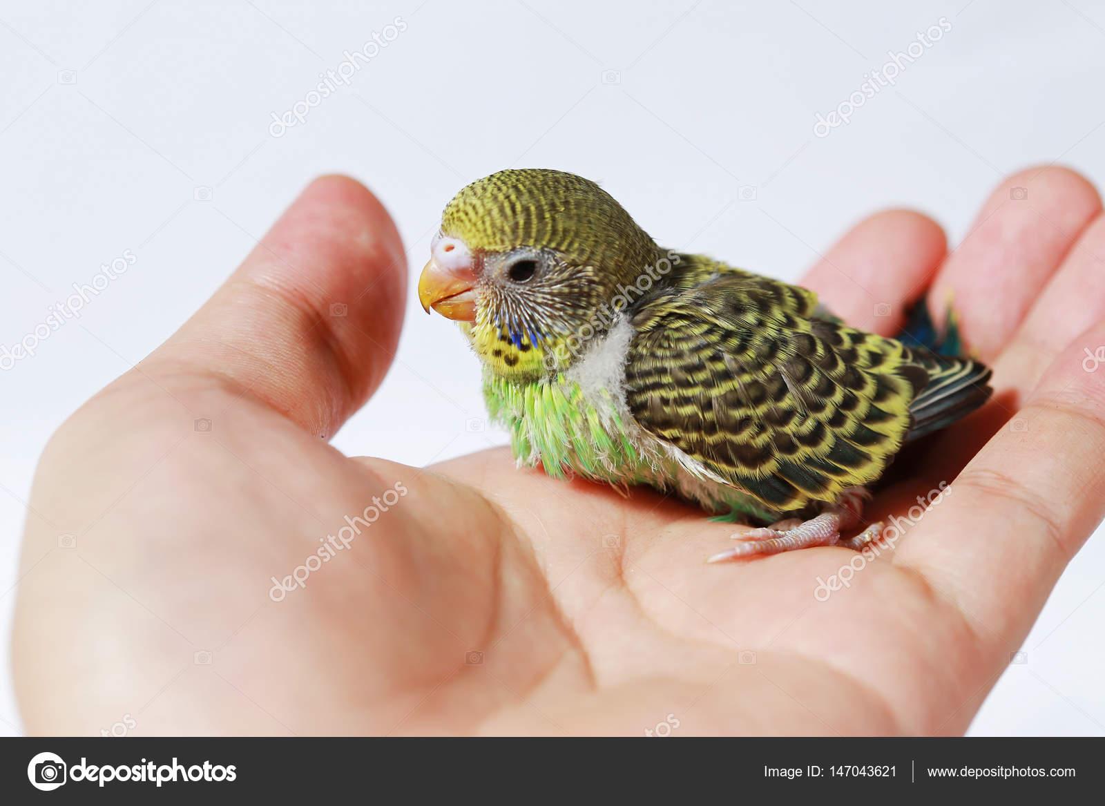 μεγάλο πουλί μικρό στόμα