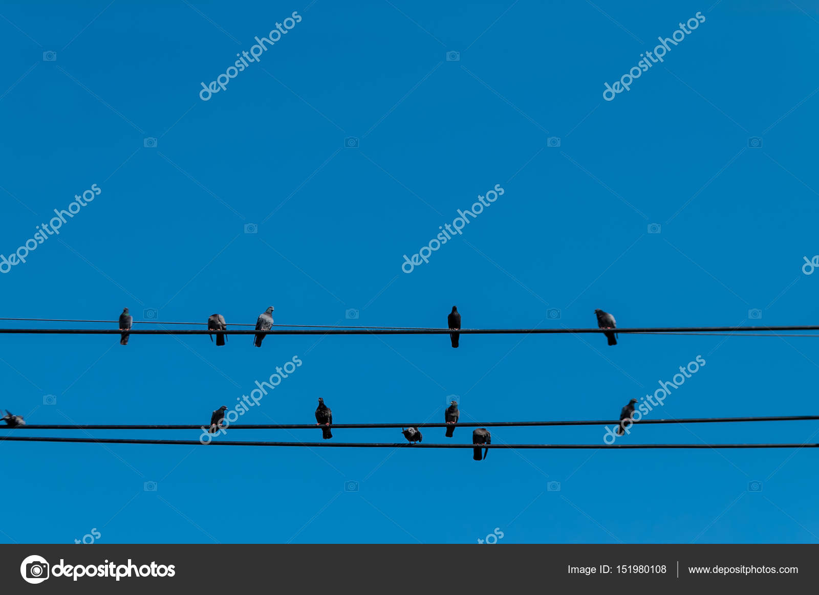 sky phone line wiring diagram birds on wires isolated against clear blue sky     stock photo  wires isolated against clear blue sky