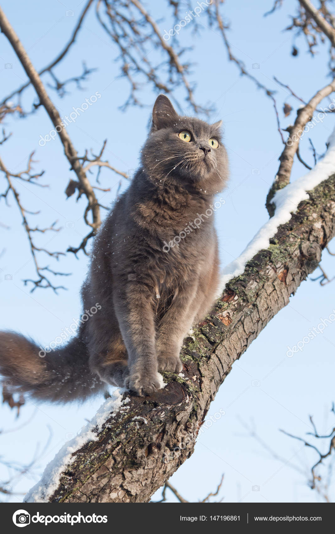 Portrait Of Fluffy Gray Cat On A Tree With Snow Stock Photo C Alexey M 147196861
