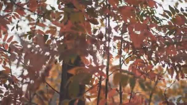 forest trees at autumn fall season. sunbeam light shining through.