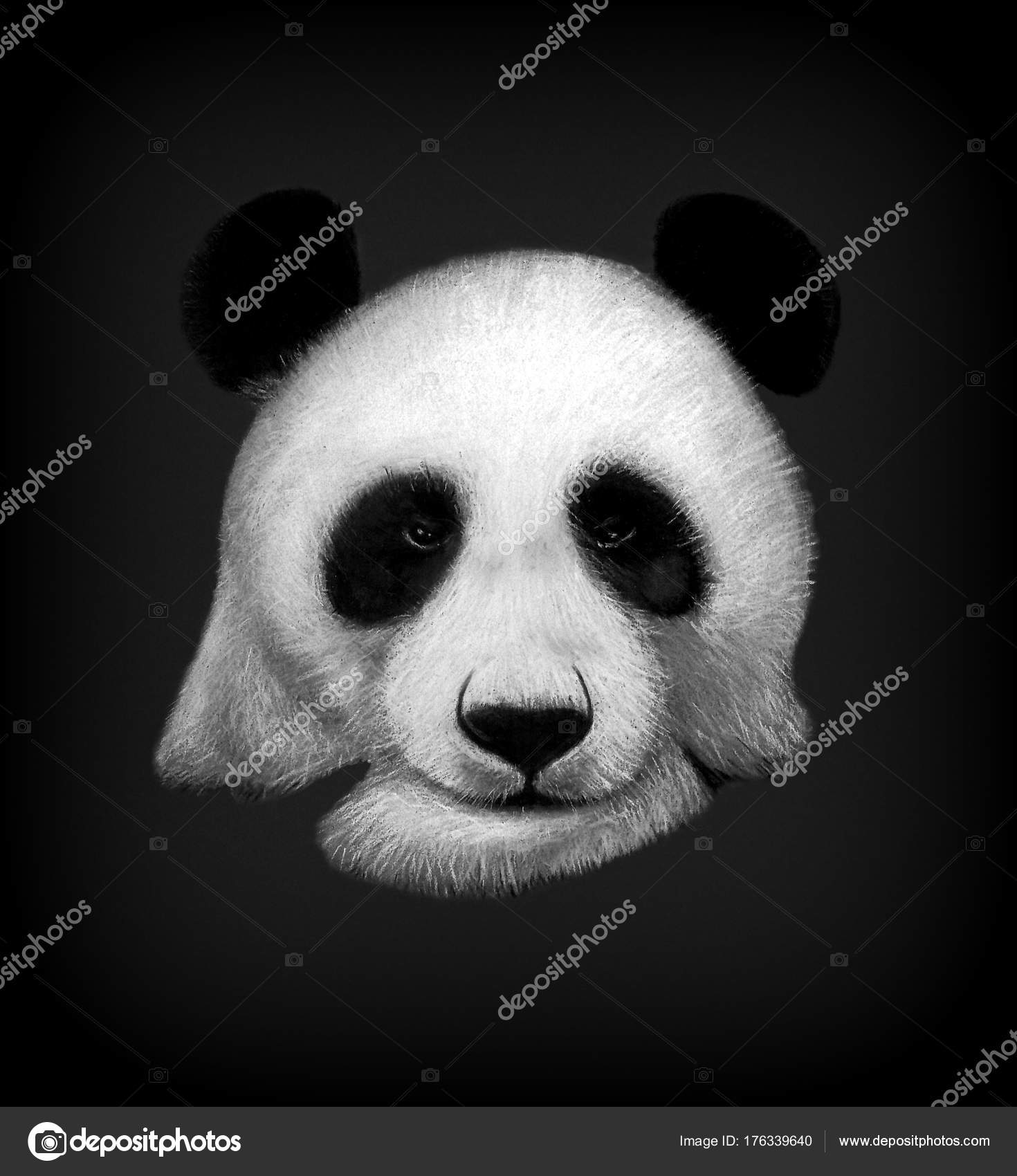 Hand drawn panda bear portrait isolated on black background colored pencils and pastel drawing animals illustration for interiors photo by
