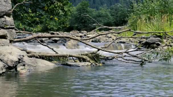 Přírodní krajina se stromy a řeka