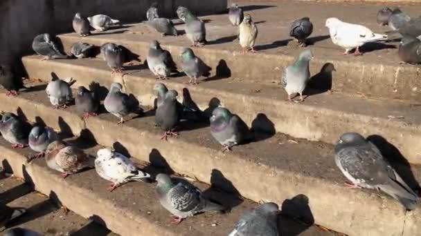 Hejno holubů sedí na schodech v parku.