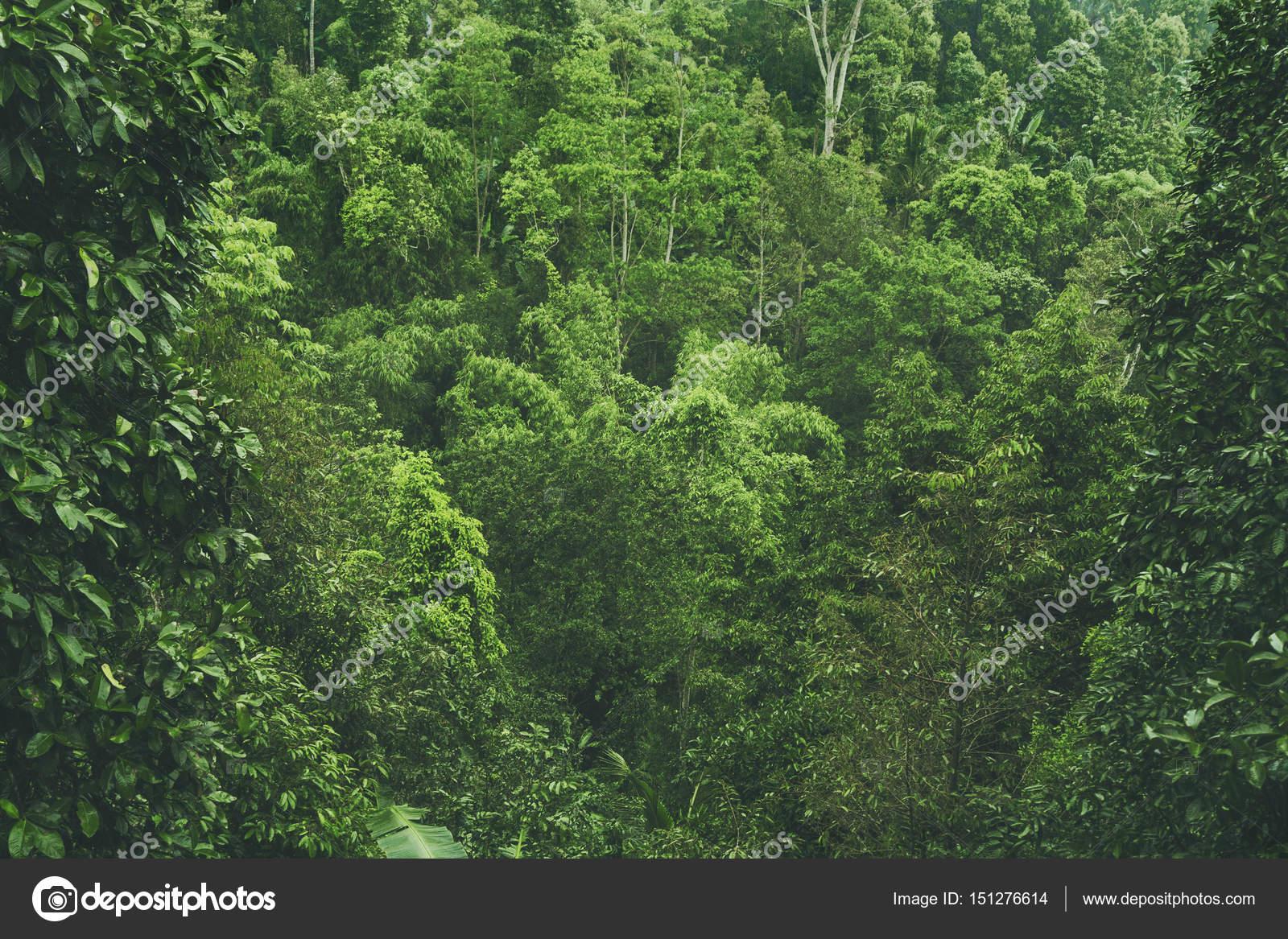 фото смотреть природа