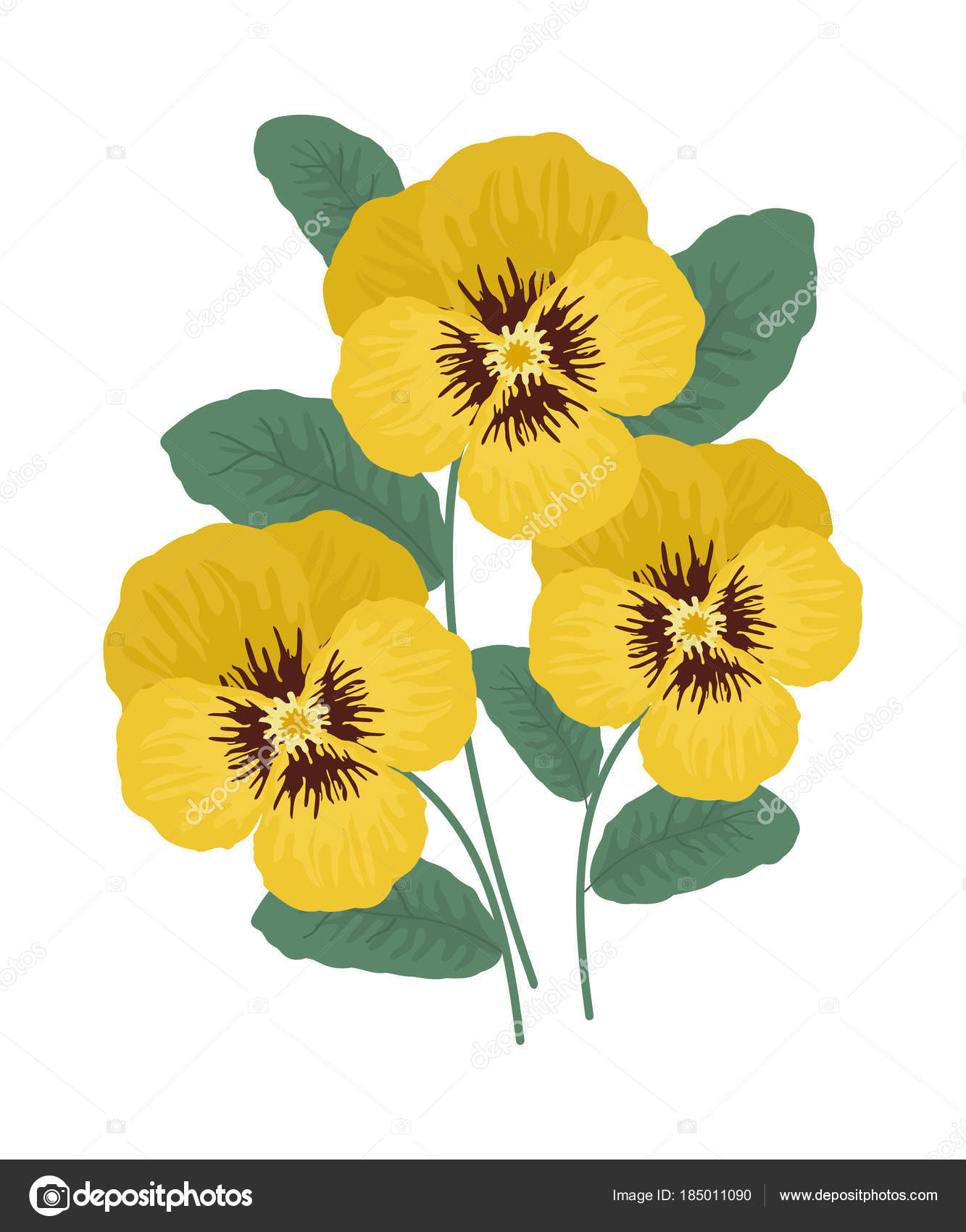 Yellow Pansy Flowers Leaves White Background Vector Illustration