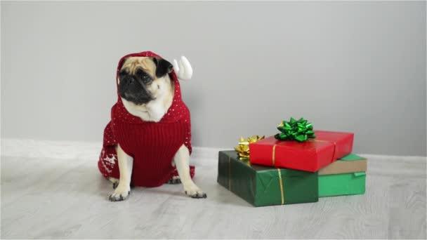 Az ajándékokat a világos csomagolás kisállat ülő. Aranyos kutyus egy mopszli tenyészt van öltözve egy nyaralás egy piros-fehér-ruha egy rénszarvas. Boldog karácsonyt. Boldog Új Évet