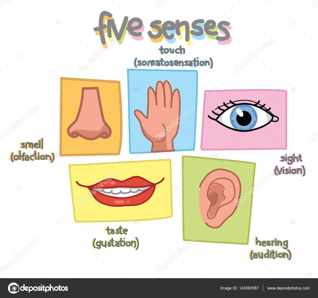 Vector de ilustraci n de cinco sentidos archivo im genes for Mural de los 5 sentidos