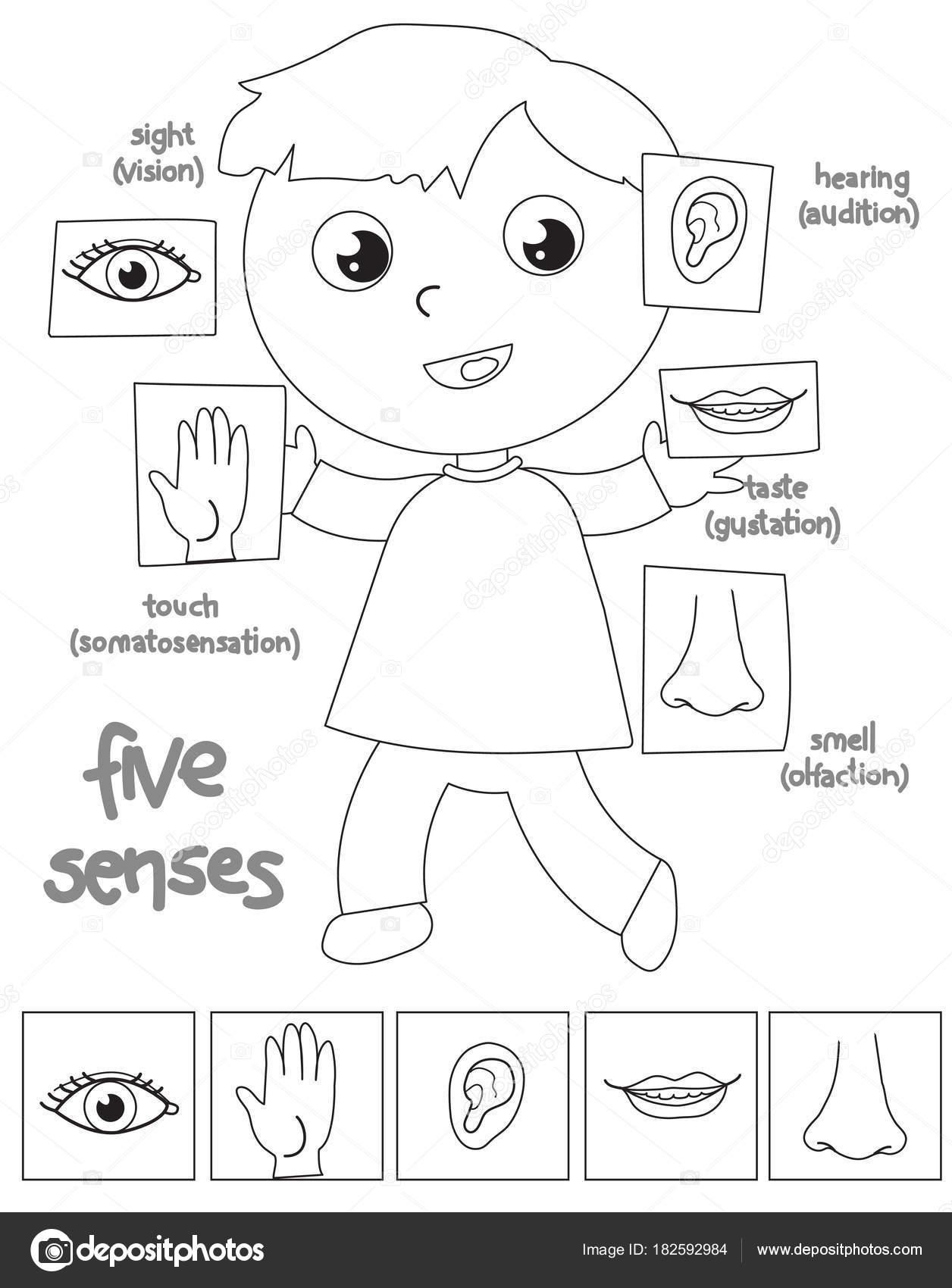 Imágenes Los 5 Centidos Niño De Cinco Sentidos Para
