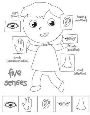Five senses boy coloring illustration