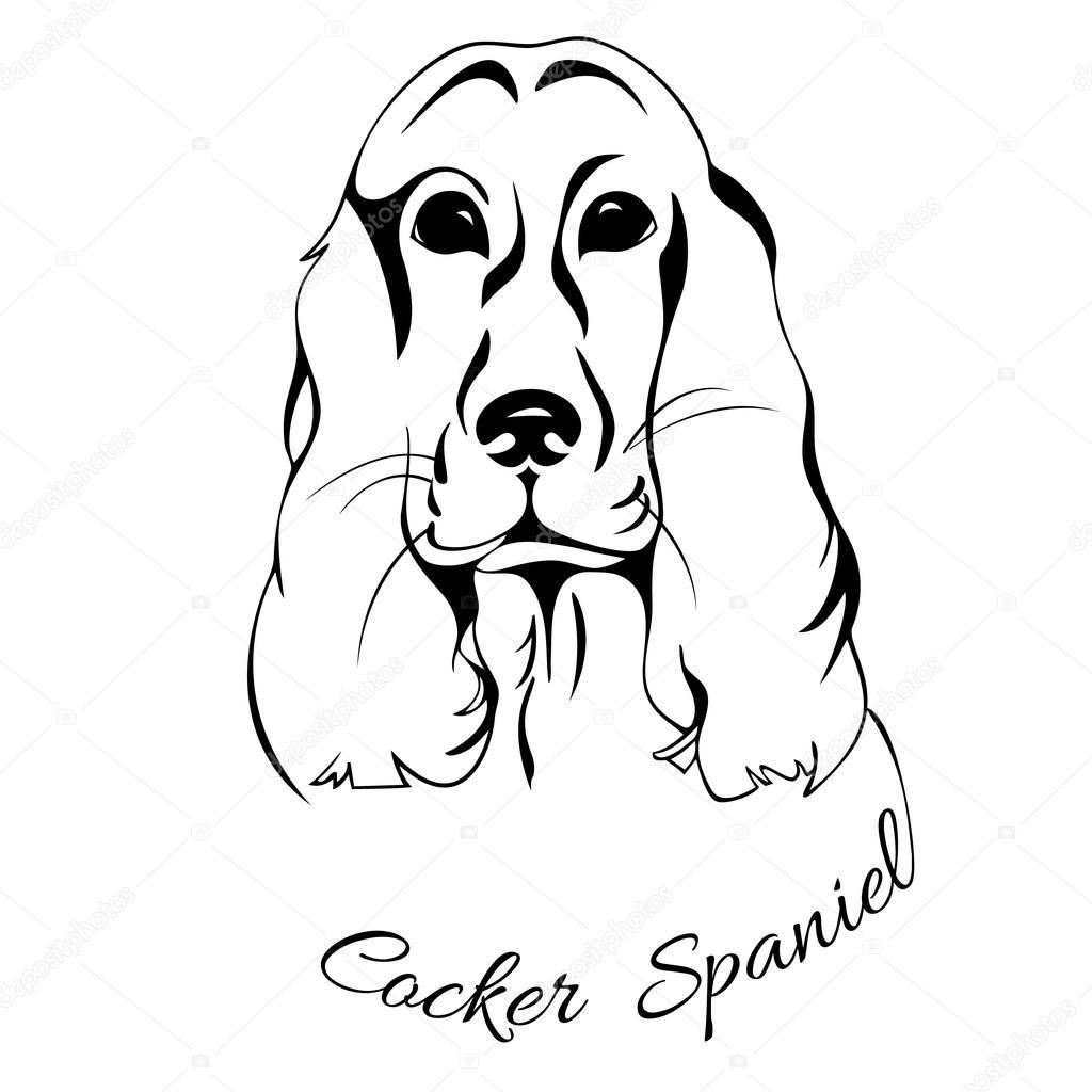 T te de chien isol cocker spaniel image vectorielle - Dessin de cocker ...