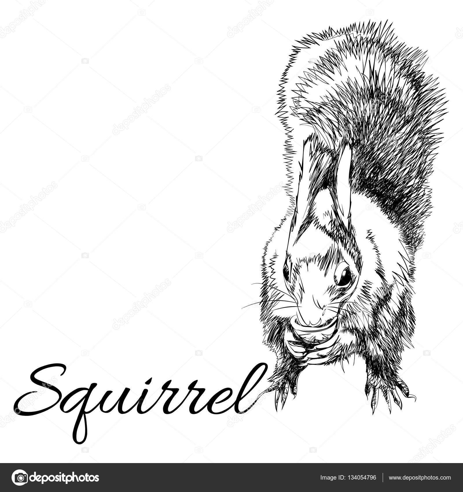 eichhörnchen im grafischen stil — stockvektor