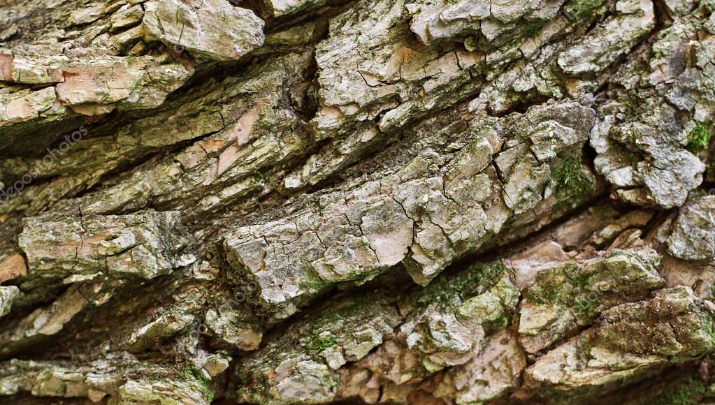 Tree bark texture background.
