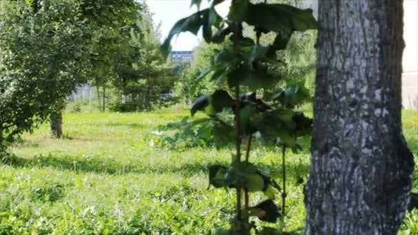 Pohled na povahu. Trávník a stromy