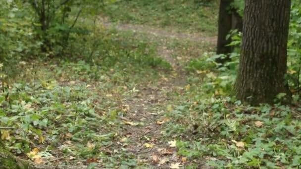 foresta di boschi. Priorità bassa degli alberi. paesaggio verde della natura. Wilderness