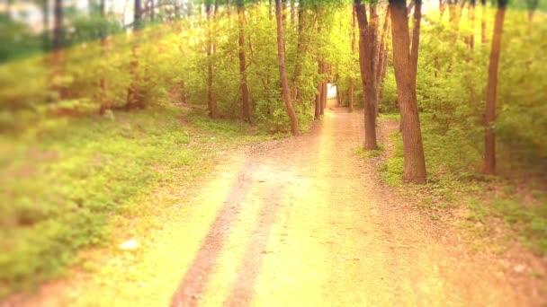Deep Forest Fairy Tale jelenet sunrise 3d render