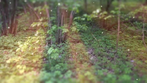 Deep Forest Fairy Tale jelenet szentjánosbogarak 3d render
