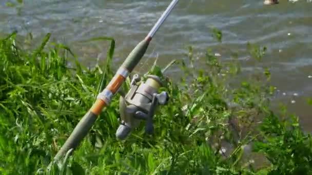 A sima víz felületének a nád, horgászbot, horgászat, 4k
