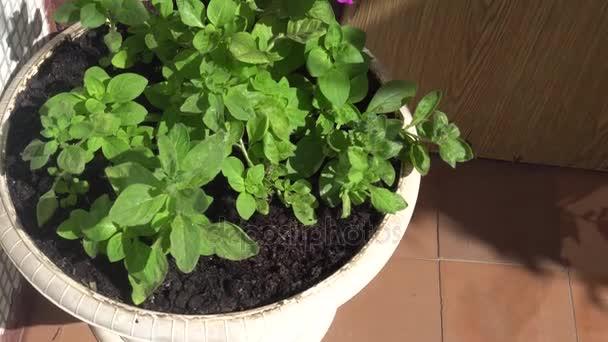 bílý květináč krásných zelených rostlin