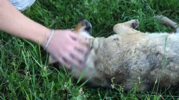 mladý muž hladil toulavý pes a s ním hraje