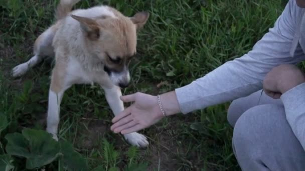 Dog sitting on green grass and giving a paw to his owner