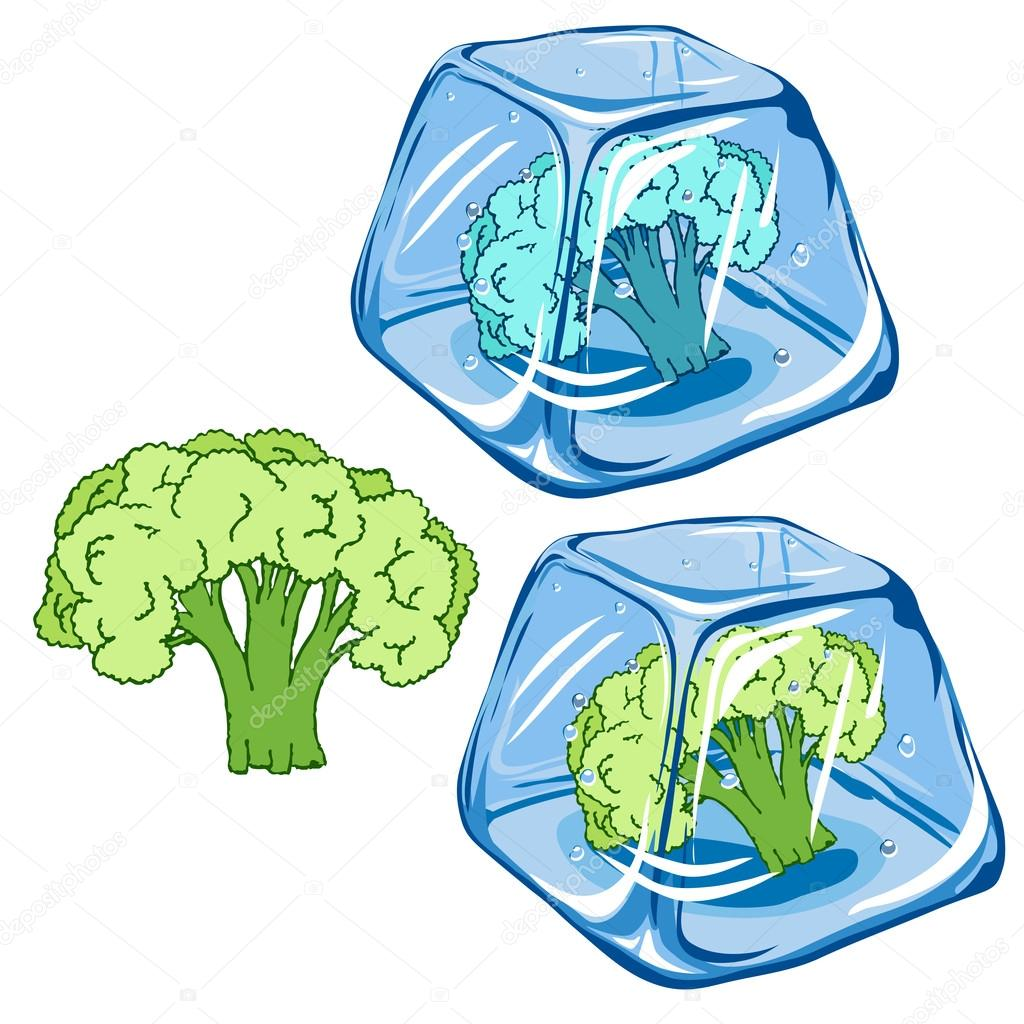 Vector Frozen broccoli in ice cube isolated on white background EPS 8.