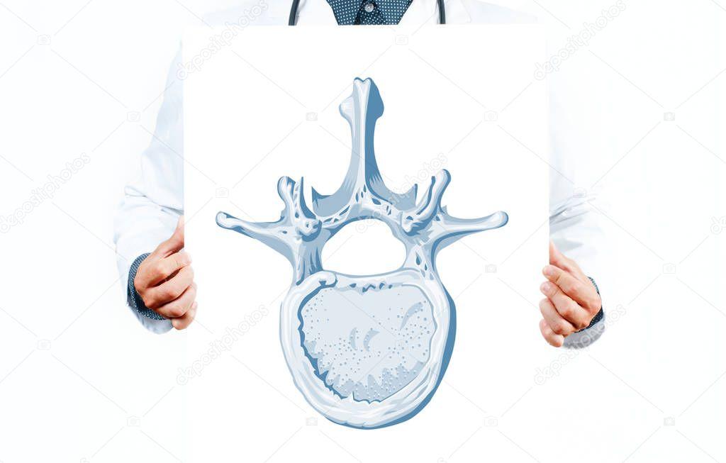 Gemütlich Wirbel Diagramm Fotos - Anatomie und Physiologie des ...