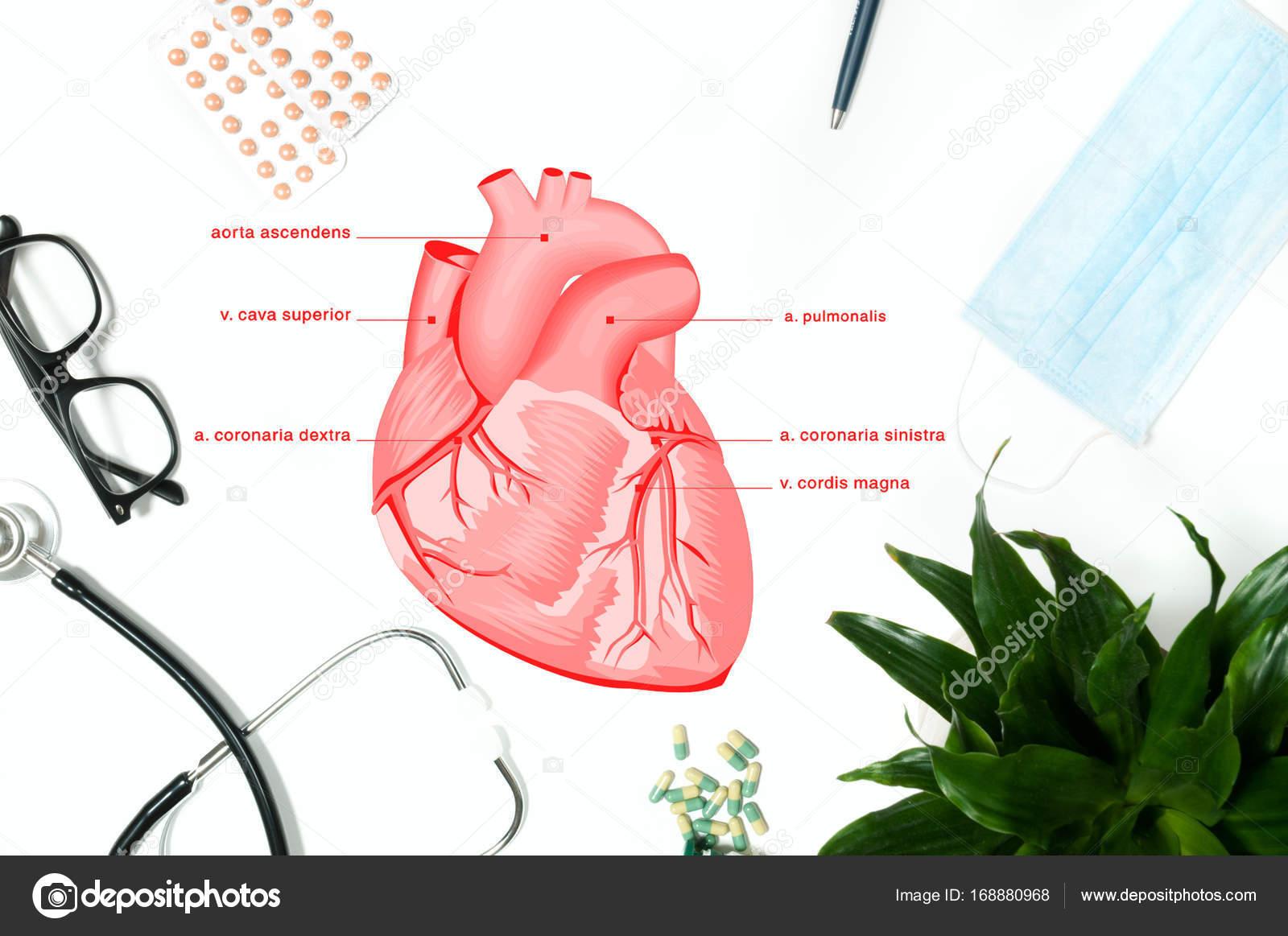 Anatomie. Arbeitsplatz des Arztes mit medizinischen Produkten ...