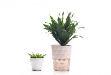 Beautiful plants in white flowerpot.