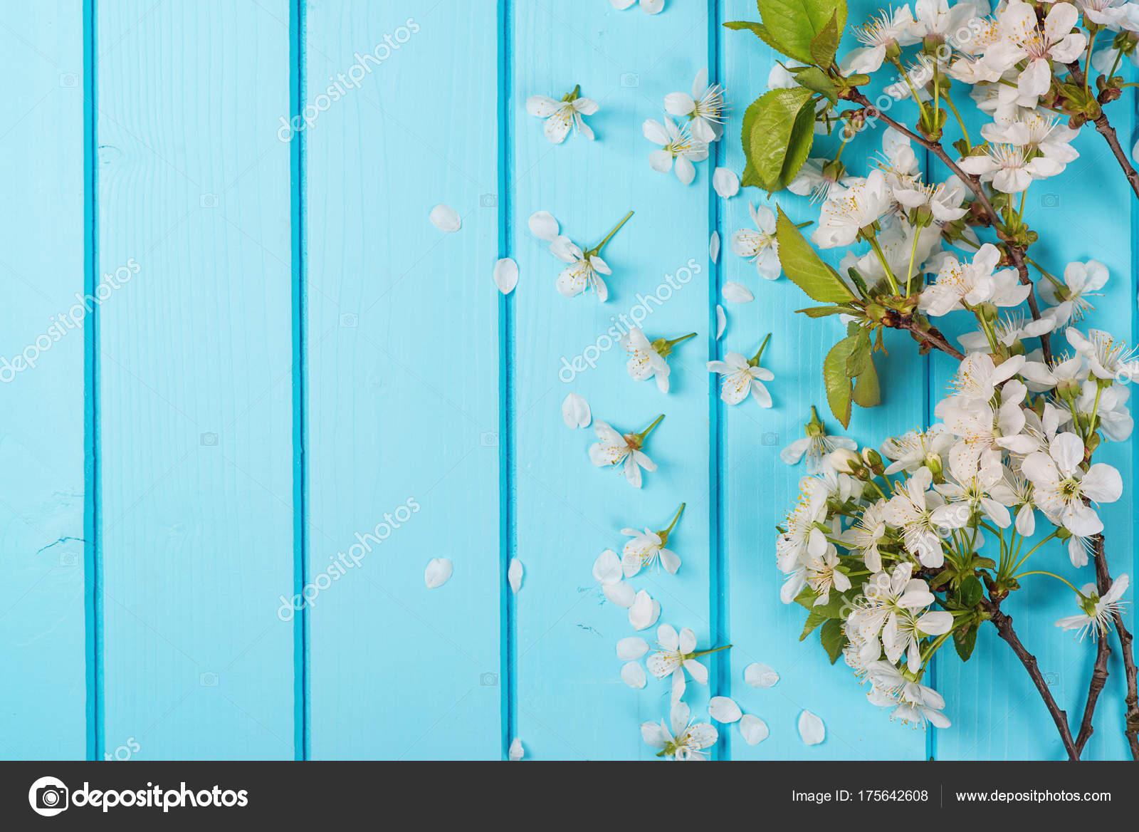 Fondo De Madera Vintage Con Flores Blancas Manzana Y: Flores Flores Blancas Sobre Fondos De Madera Azul