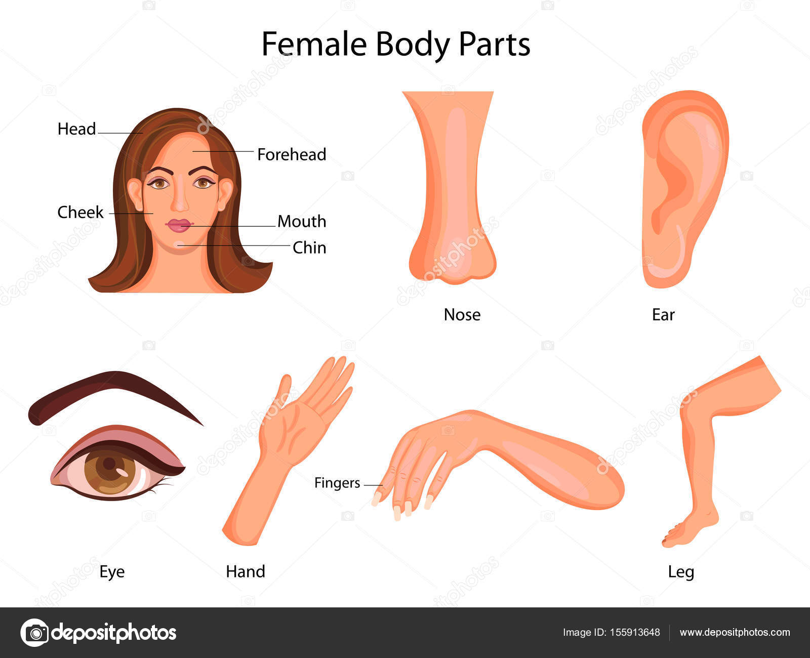 Medical Education Chart of Biology for Female Body Parts Diagram ...