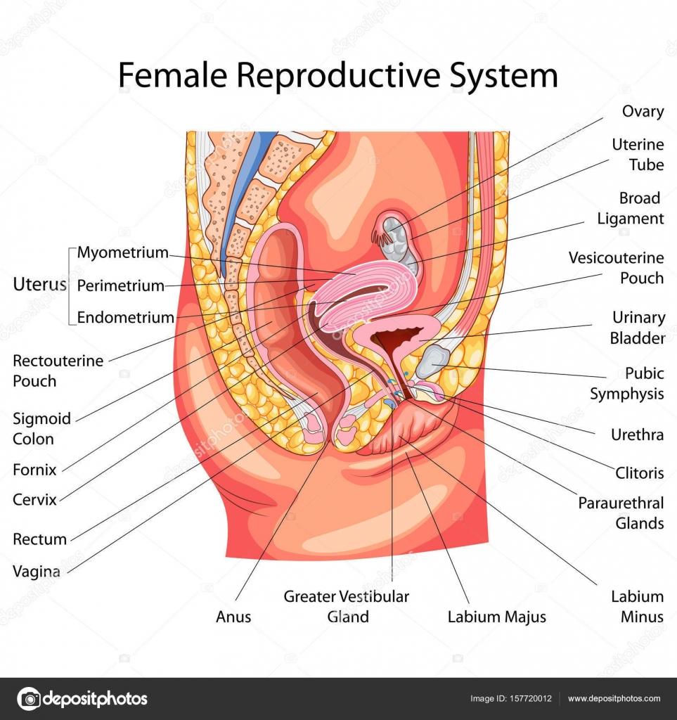 Gráfico de Educación de la biología para el diagrama del sistema ...