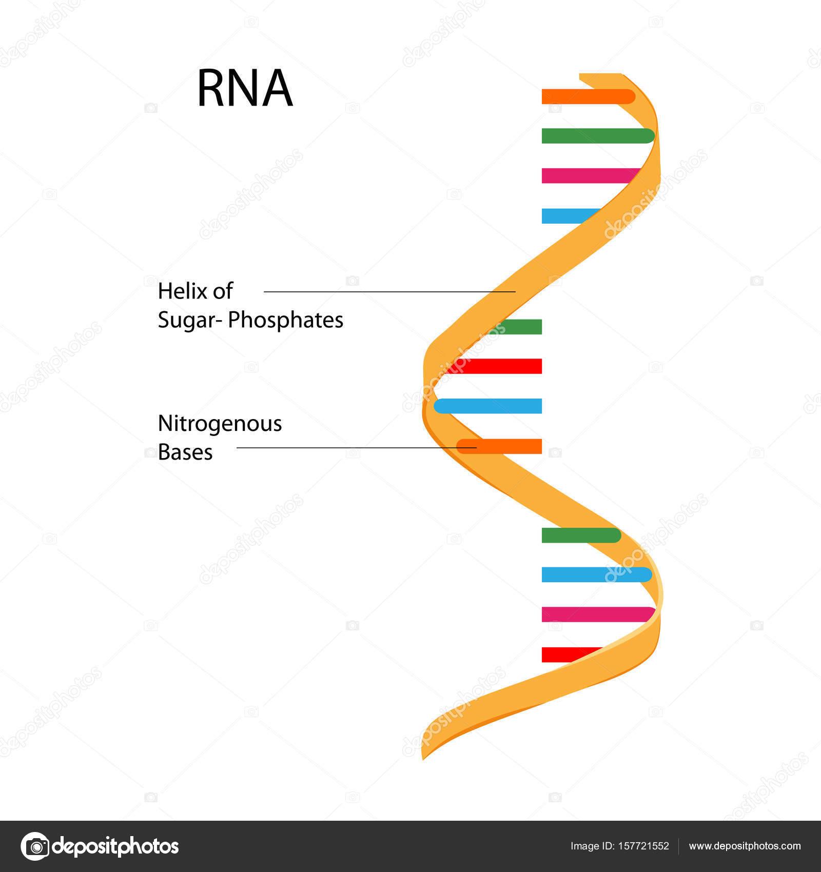 Gráfico de Educación de la biología para el diagrama de la ...