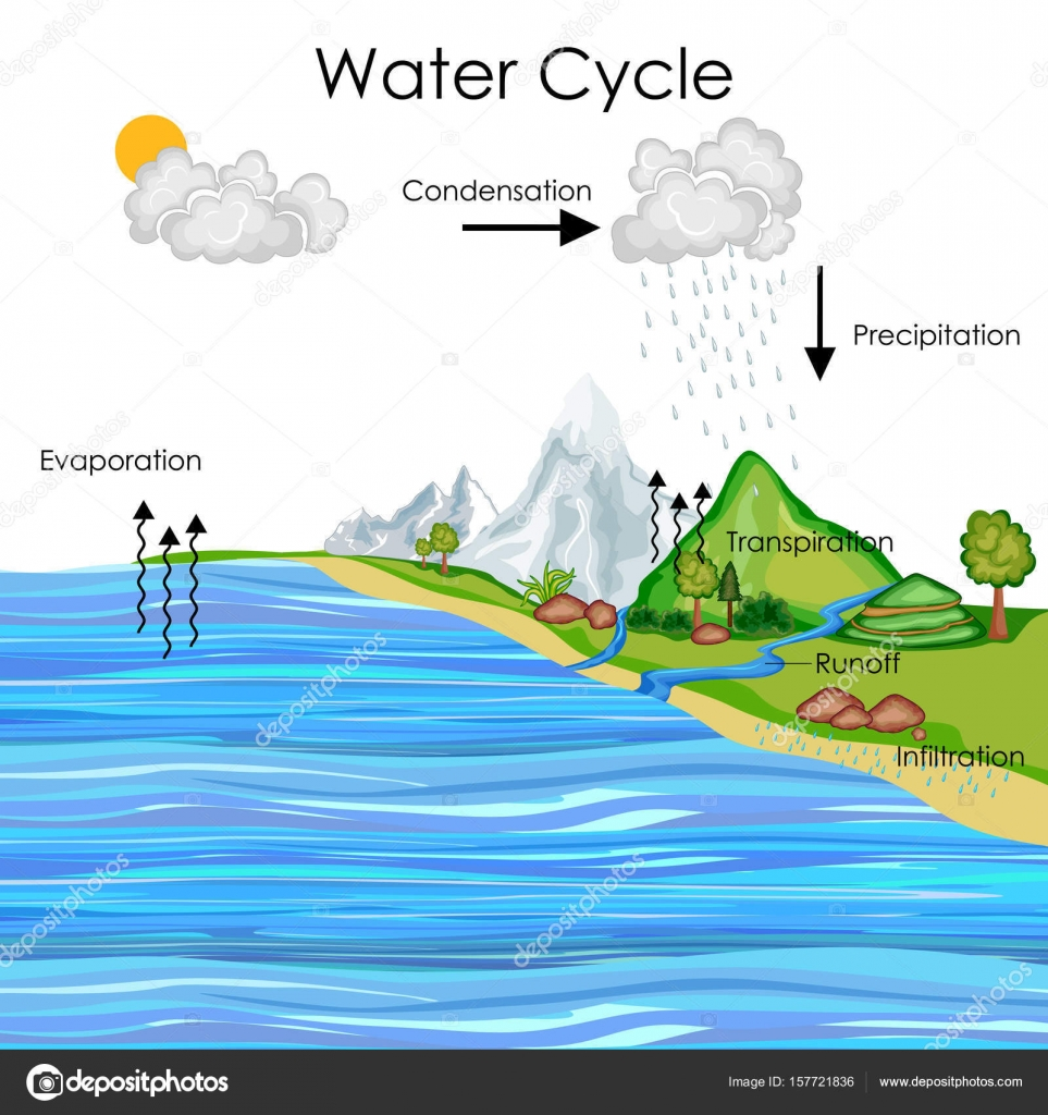Education Chart Of Water Cycle Diagram  U2014 Stock Vector