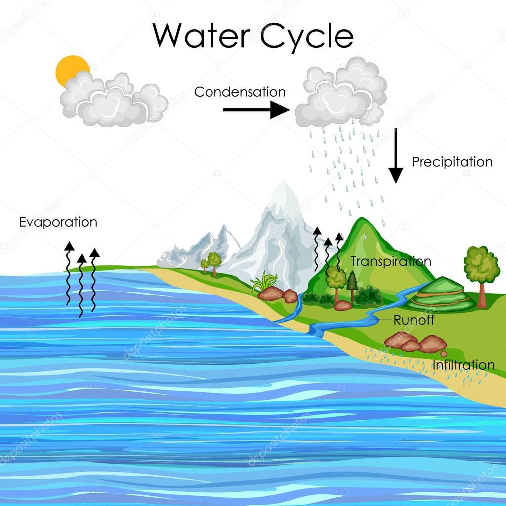 Education Chart of Water Cycle Diagram — Stock Vector ...