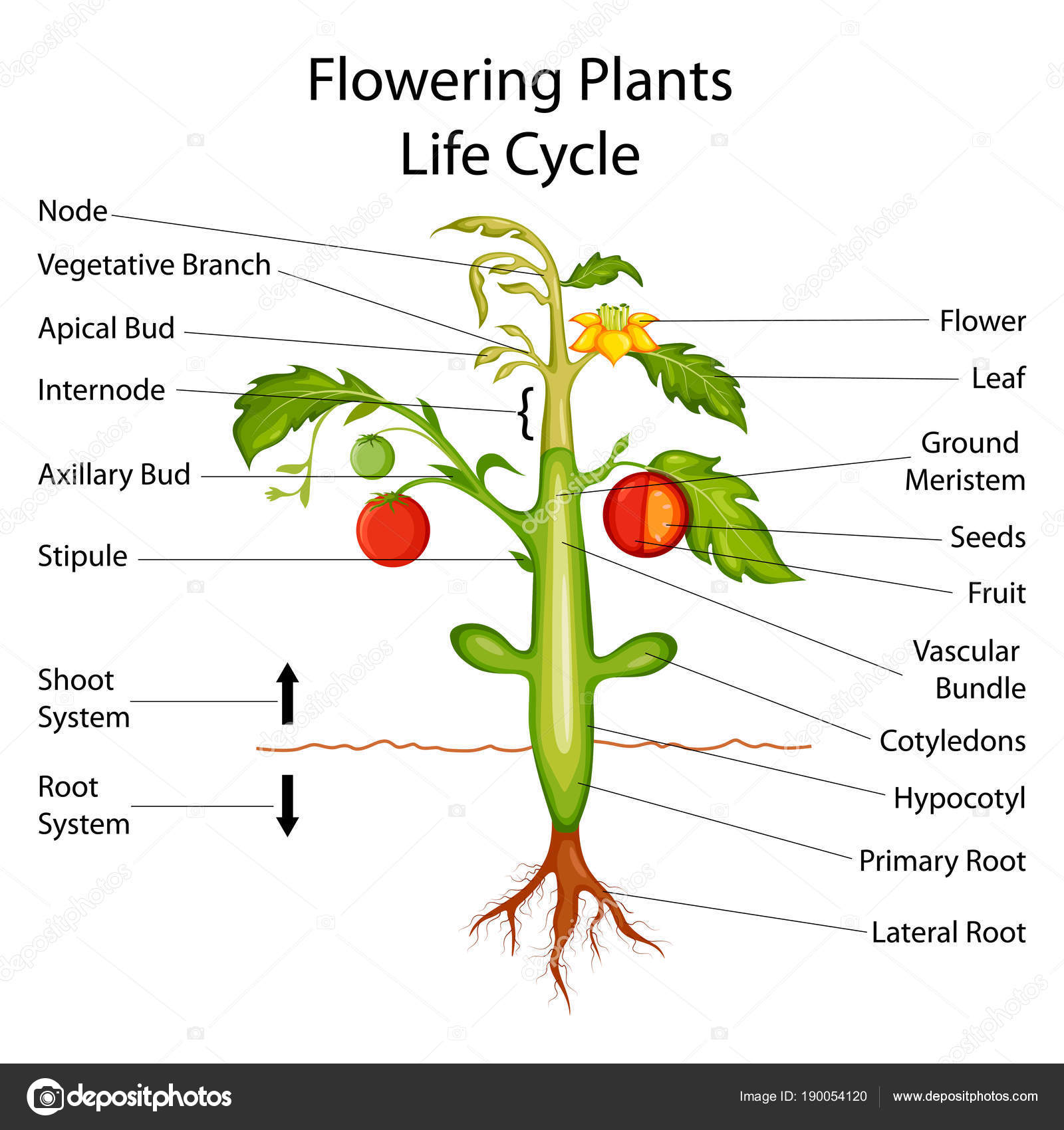 Diagram flower plant product wiring diagrams diagram flower plant images gallery izmirmasajfo