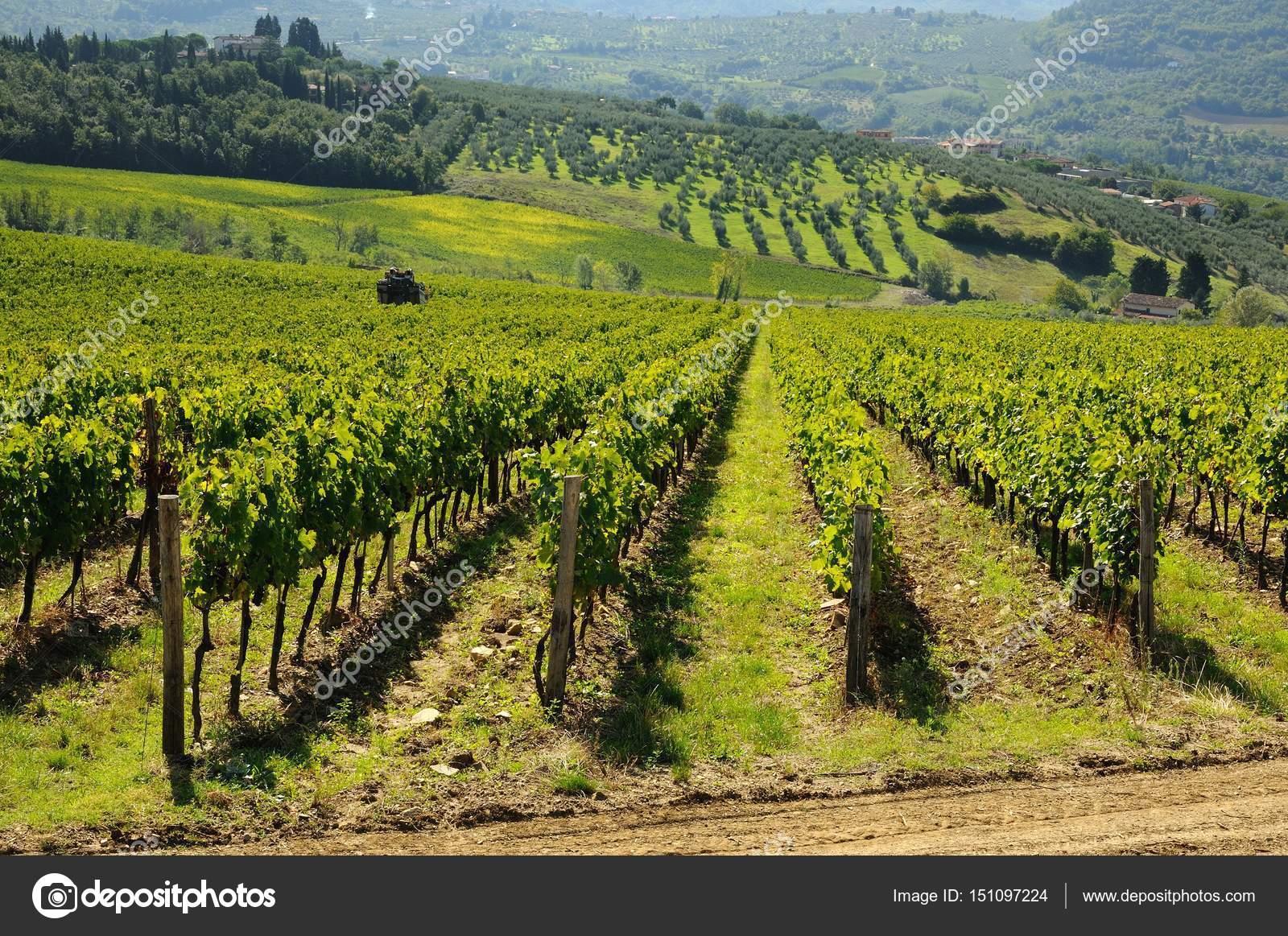 Vineyard in Tuscany, Chianti, Italy  — Stock Photo © Dan74